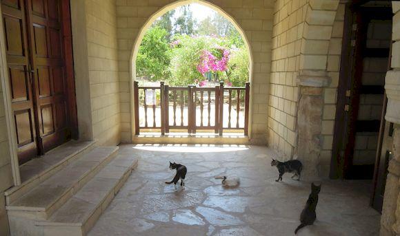 Кошачий, храм Кипра
