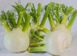 Фенхель, овощи Кипра, фото