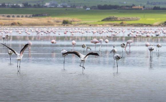Соляное озеро, посмотреть на Кипре на машине