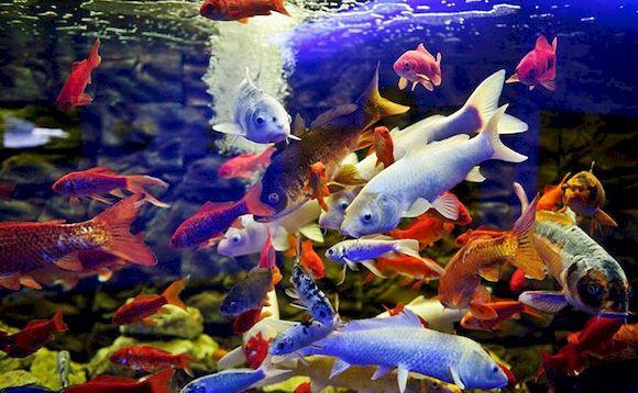 Сходить с ребенком в аквариум в Протарасе