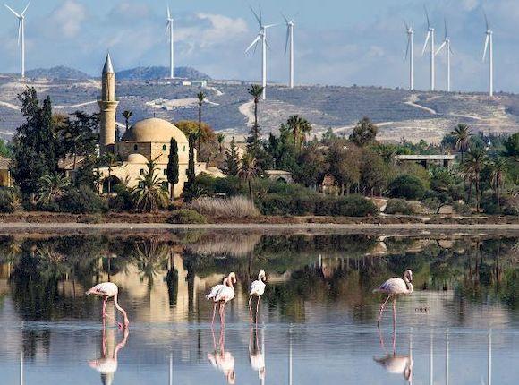 Посмотреть на розовых фламинго с детьми возле Ларнаки на Кипре