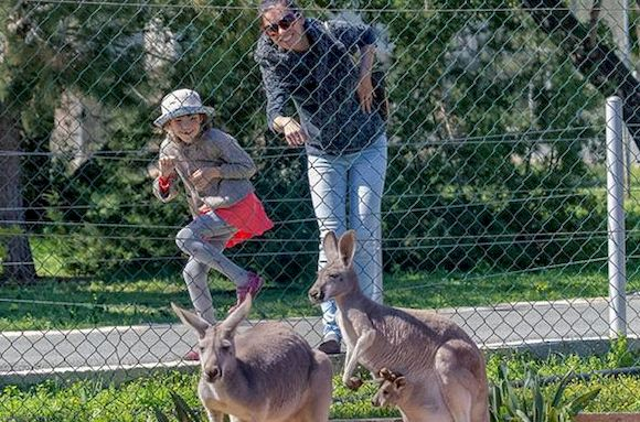 Зоопарк в Ларнаке посмотреть с детьми