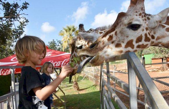 Посмотреть зоопарк в Пафосе с детьми