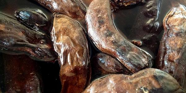 Применение Рожкового сиропа из Кипра