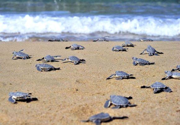 Лучшие пляжи Пафоса