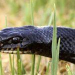 Есть ли змеи на Кипре